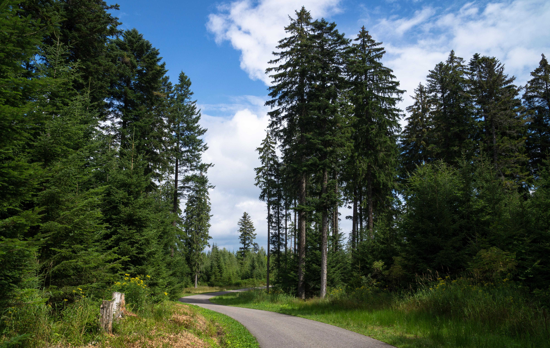 Natur-Idylle Schwarzwald